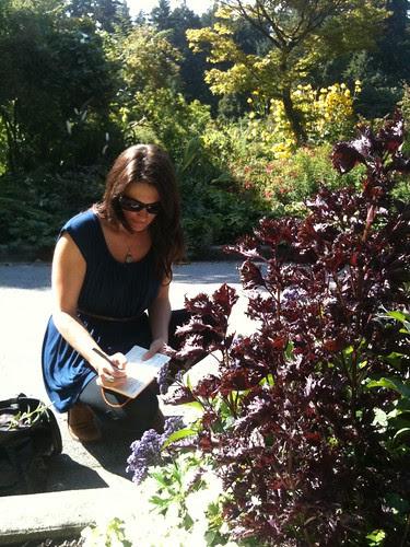 Purple Shiso & Heliotrope @ The Rose Garden