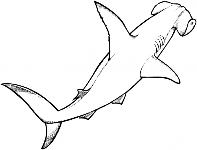 Shark Drawing Step By Step at GetDrawings | Free download