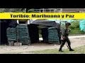 [Video] Toribío: marihuana y paz