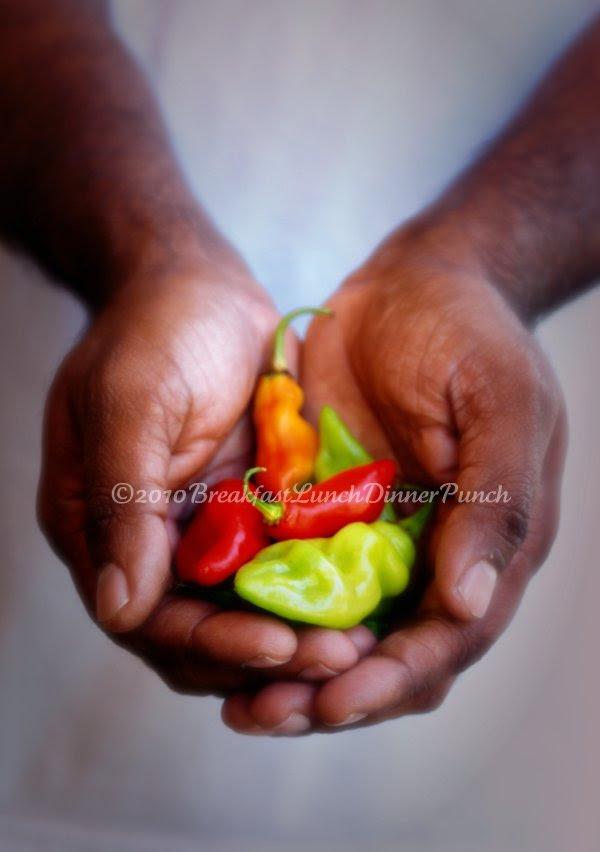Trinidad Pimento Peppers