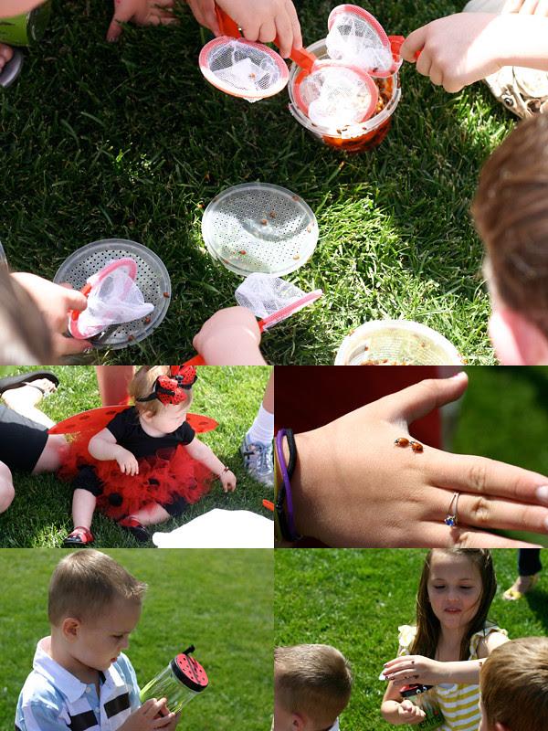 catching ladybugs