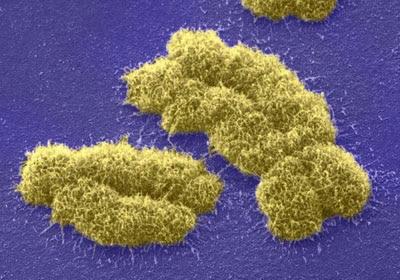 Биологическая роль Y-хромосомы оказалась гораздо более важной, чем предполагалось ранее. Содержащиеся в ней гены работают и за пределами половой системы.
