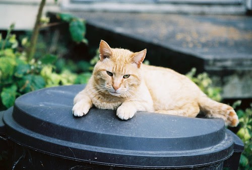 Orange Tomcat On His Throne