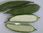 Sayur Gambar