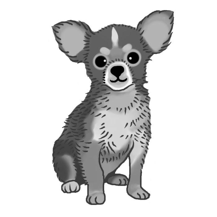 チワワ2モノクロ犬の無料イラスト動物素材 イラスト 犬