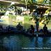 2013-09-22 XXXI Bajada del Canal 15.jpg