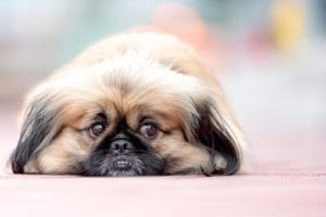 Separation Anxiety in Dogs : Here is a guide to help you ...