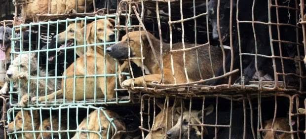 Exterminio del perro en Tailandia