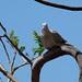 Bird on a Bow