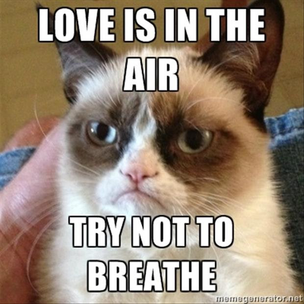 Grumpy Cat Love Is In The Air Dump A Day