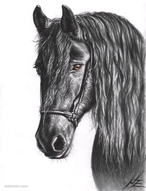 stunning drawings  animals   pencil  paper