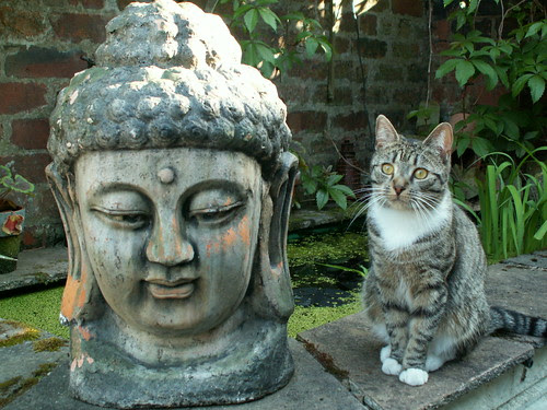 As chilled as Buddha...