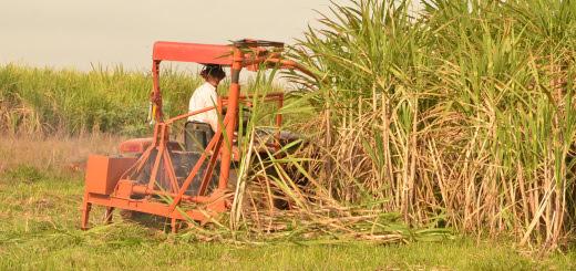 Cortadora de cana Biofábrica Misiones