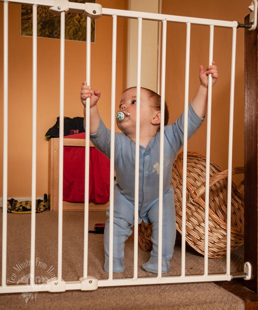 Tues ~ Feb 21st, This little man hardly needs this gate now, but it helps 'contain' him just a little! ;D