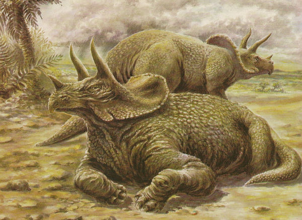 OLIVIER_1981_Triceratops