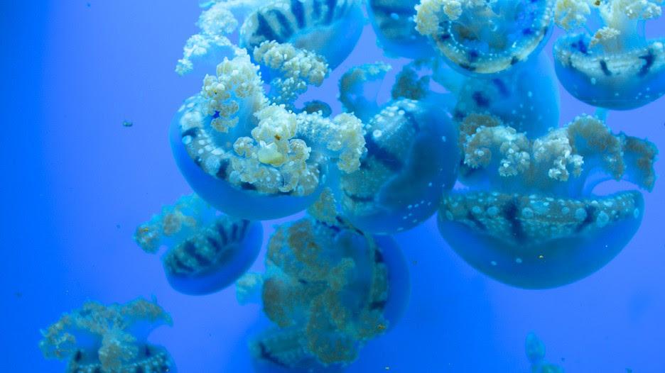 Birch Aquarium 22166