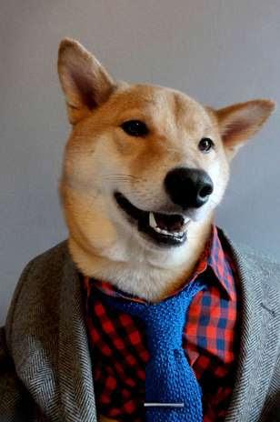 Club Monaco, Zara e Gunt Rugger são algumas das marcas que o cachorro cheio de estilo exibe no blog, que soma centenas de comentários de internautas Foto: Mensweardog.tumblr.com / Reprodução