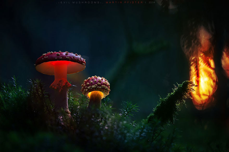 mushrooms-martin-pfister-13