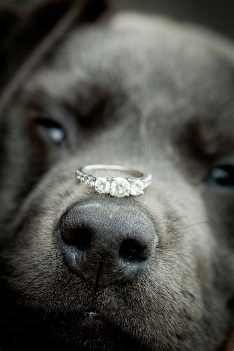 1000  ideas about Puppy Proposal on Pinterest   Dog