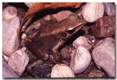 Nethravathi River basin is known for its rich diversity of amphibians, many of which are found no where else on earth