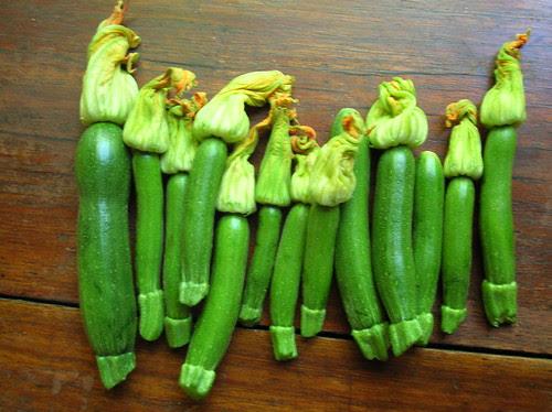 female zucchinis