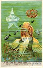 meduse 5