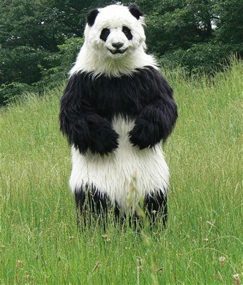 lihat arrival super cute koala panda swing resin home park