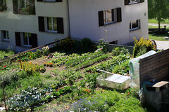 Swiss community gardens  152