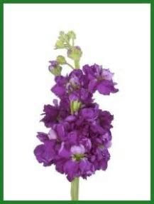 Thy Will Be Done : Purple Flowers Everywhere: