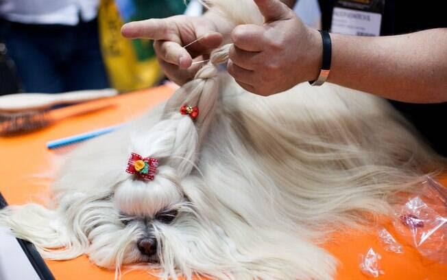 Penteados para Shih Tzu
