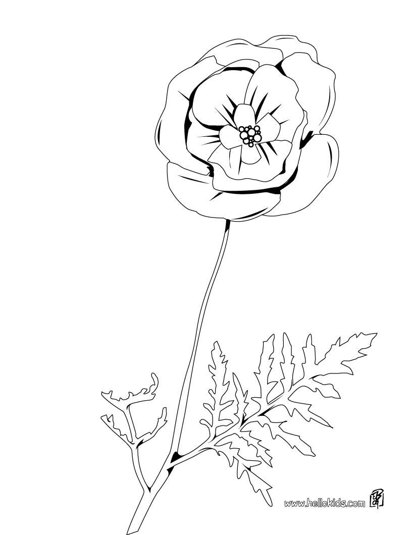 luxus tulpen ausmalbilder kostenlos   top kostenlos