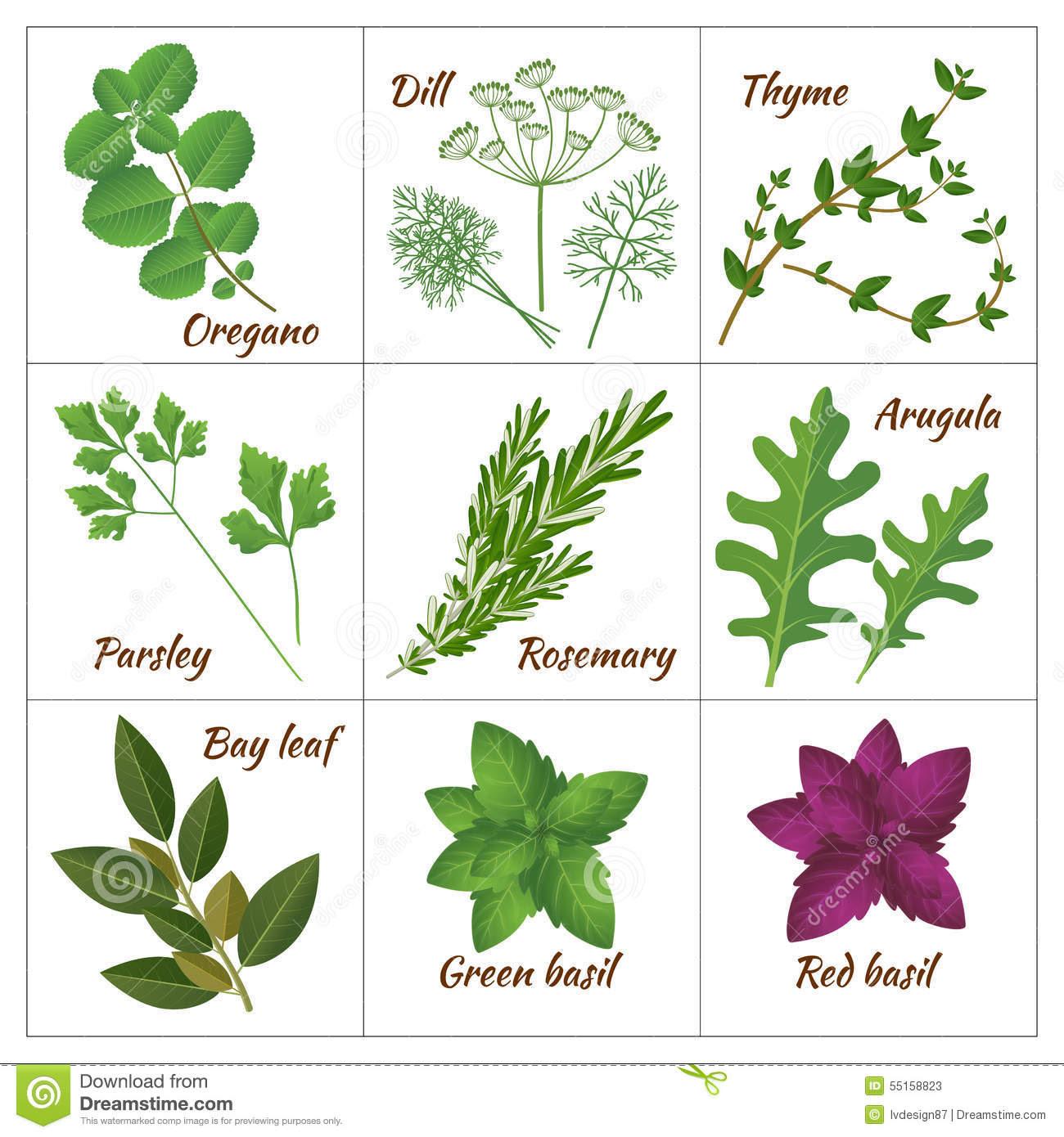 Aromatic herbs clipa