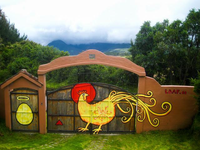 Chicken & The Egg