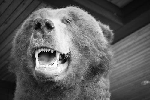 BearFace