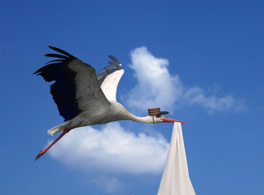 Paulson Post: On Storks and Steadfast Love