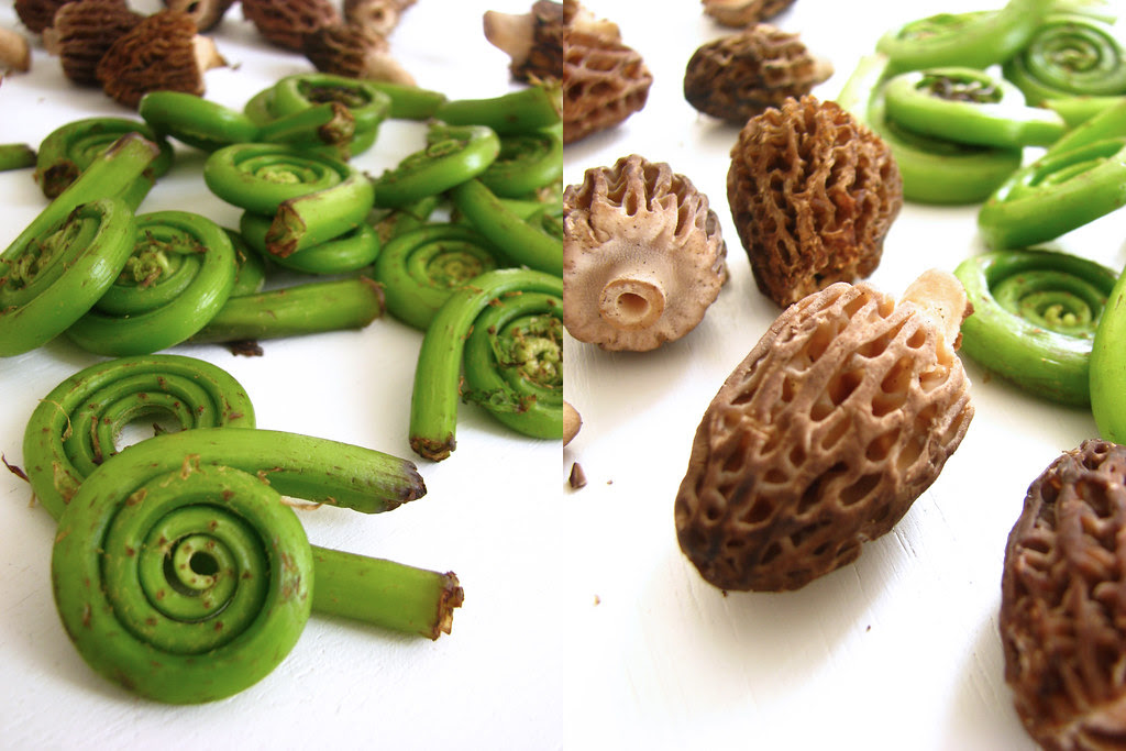 morels & fiddlehead fern