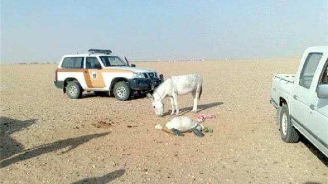 Arabie Saoudite : un cheikh salafiste retrouvé mort en essayant de pratiquer la sodomie avec un âne