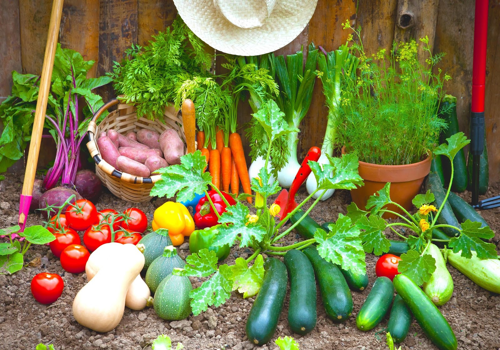 easy vegetable garden plants in spring vegetable garden