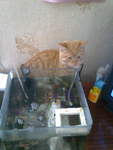 Котик на рыбалке 2