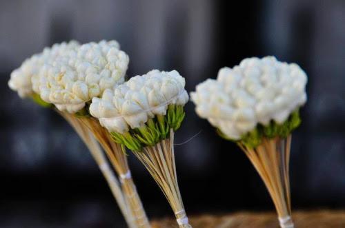 """Résultat de recherche d'images pour """"bouquet de jasmin tunisie"""""""
