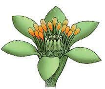 Recreación de flor primitiva.