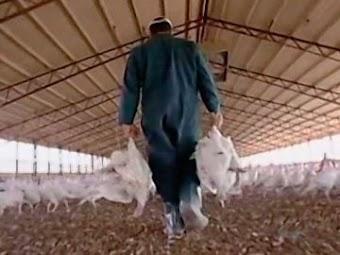 Turkey Farmer