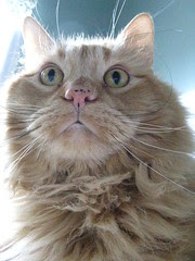 Jasper looking kitten-ish