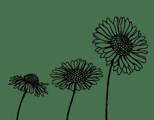 Desenhos Para Colorir Flor De Camomila