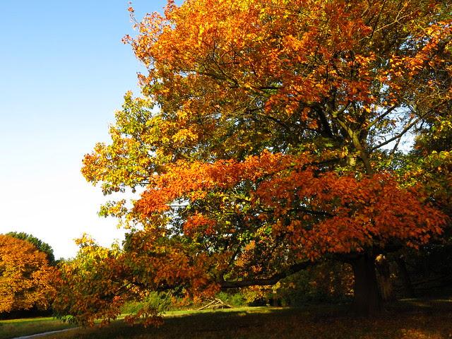 Trees near Little Tumulus Field