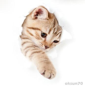 Da bin ich! - Viele süße Katzenbilder und Katzenfotos ...