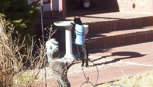 thirsty cat 1