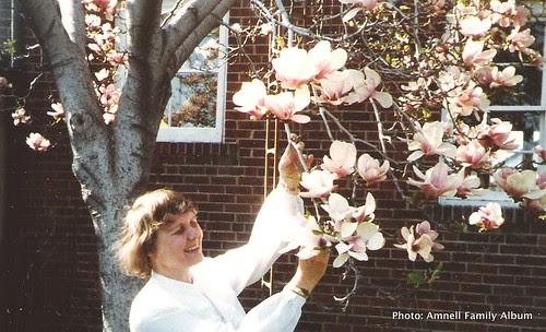 Pirkko ja magnolia by Anna Amnell