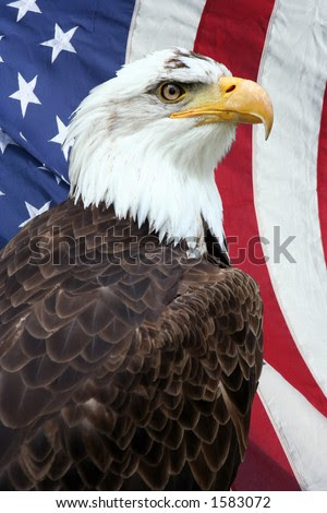 eagle and american flag tattoos. american flag eagle. with an