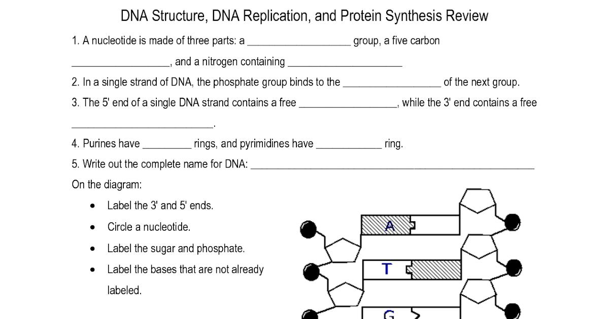 Dna Structure Worksheet Answer Key Pdf - worksheet